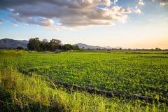 Peanut farm Royalty Free Stock Images