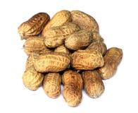 Peanut. Fresh peanut over white background Royalty Free Stock Photo
