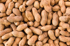 Peanut or groundnut Royalty Free Stock Photo