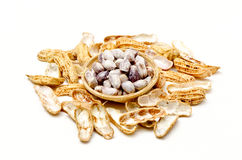 Peanut or groundnut (Arachis hypogaea L.) Royalty Free Stock Photos