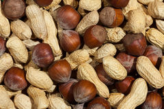 Peanut and hazelnut texture Stock Photos