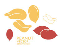 Peanut. Icon set Royalty Free Stock Images