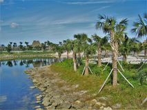 Peanut Island Palm Trees. Peanut Island is a small, but popular, island located in West Palm Beach, Florida royalty free stock photos