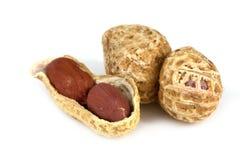 Peanut isolated Stock Photo