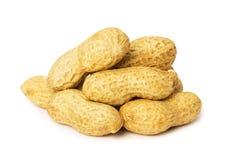 Peanut isolated on white background Stock Image
