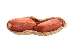 Peanut isolated Royalty Free Stock Photo