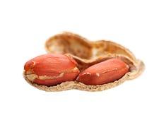 Peanut isolated Stock Photos