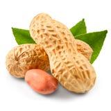 Peanut. Isolated on white background Royalty Free Stock Photo