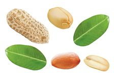 Peanut and leaf. Peanut with white background, close up, leaf, illustration royalty free illustration