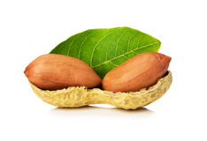 Peanut with leaves isolated on white background Royalty Free Stock Images