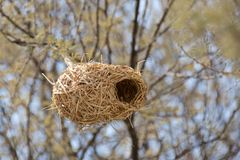 Peanut-like Bird`s Nest Royalty Free Stock Image