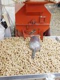 peanut at market Royalty Free Stock Photos