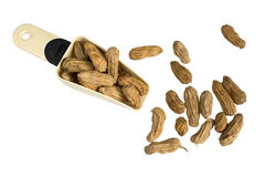Peanut on mattock. White background stock photography