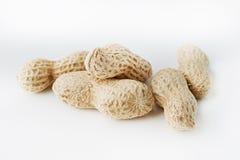 Peanut nut on white background Stock Photography