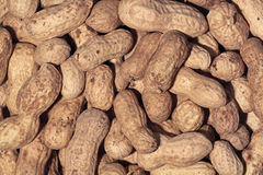 Peanut nuts Stock Images