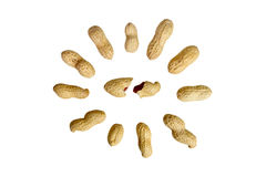 Peanut. Peanuts isolated on white background.  composition of peanuts Royalty Free Stock Photography