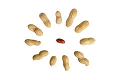 Peanut. Peanuts isolated on white background. composition of peanuts Stock Photos