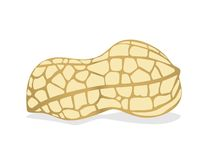 Peanut. Plant seeds in the soil, which is skinned peanuts or peanut china Stock Photo