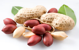 Peanut with pods Stock Images