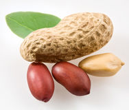 Peanut with pods Stock Image