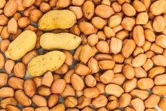 Peanut seed stock photo