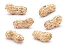 Peanut set royalty free stock photos
