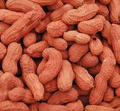 Peanut shells. A collection of red peanut shells Royalty Free Stock Photography