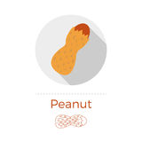 Peanut vector illustration. In flat design style with long shadow. Round shape, isolated on white background. Thin line icon included stock illustration