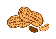 Peanut vector illustration Royalty Free Stock Images