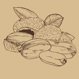 Peanut vector isolated on brown background Stock Image