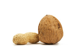 Peanut and a walnut Royalty Free Stock Images