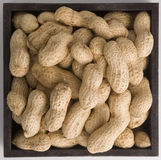 Peanuts. In a squared box royalty free stock photography