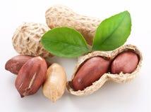 Peanuts. Stock Photos