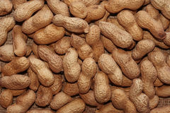 Peanuts. Natural peanuts background - close up Stock Images