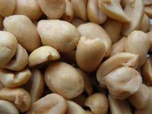 Peanuts. Salted peanuts stock photo