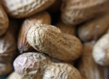 Peanuts. A close up of various shapes and sizes of peanuts in their shells Royalty Free Stock Photo
