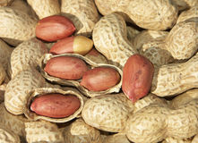 Peanuts. In and out of their shells Royalty Free Stock Photography