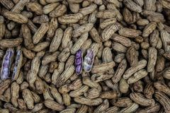 Peanuts. Boiled Peanuts for snack and cooking Royalty Free Stock Photos