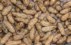 Peanuts cleaning in water Royalty Free Stock Images