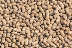 Peanuts. Dried peanuts dried under the hot sun Royalty Free Stock Image