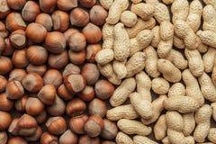 Peanuts and hazelnuts Royalty Free Stock Photo
