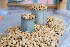 Peanuts Hick Royalty Free Stock Images