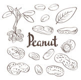 Peanuts, kernels and leaves. Royalty Free Stock Image