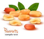 Peanuts with leaves. Vector illustration Stock Photo