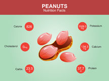 Peanuts nutrition facts, peanuts with information, peanuts vector Stock Photography