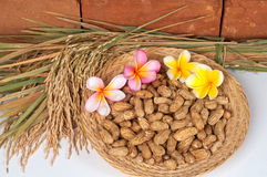 Peanuts and Paddy Rice. Royalty Free Stock Photography