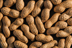 Peanuts seed. Many groundnuts. Background of raw peanuts in shell Royalty Free Stock Photography