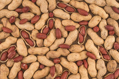 Peanuts seed placed on Peanuts. Stock Images