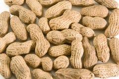 Peanuts in shell royalty free stock photo