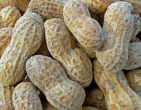 Peanuts in the shell. Macro of roasted peanuts in the shell Royalty Free Stock Image